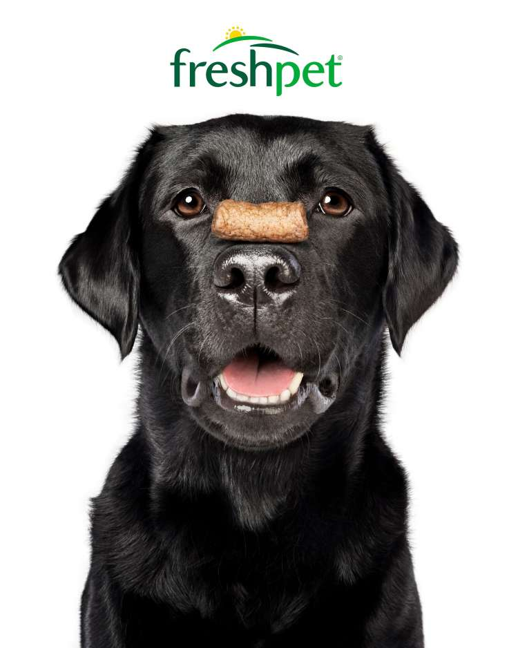 Freshpet Dog Joy Portrait_Chicken