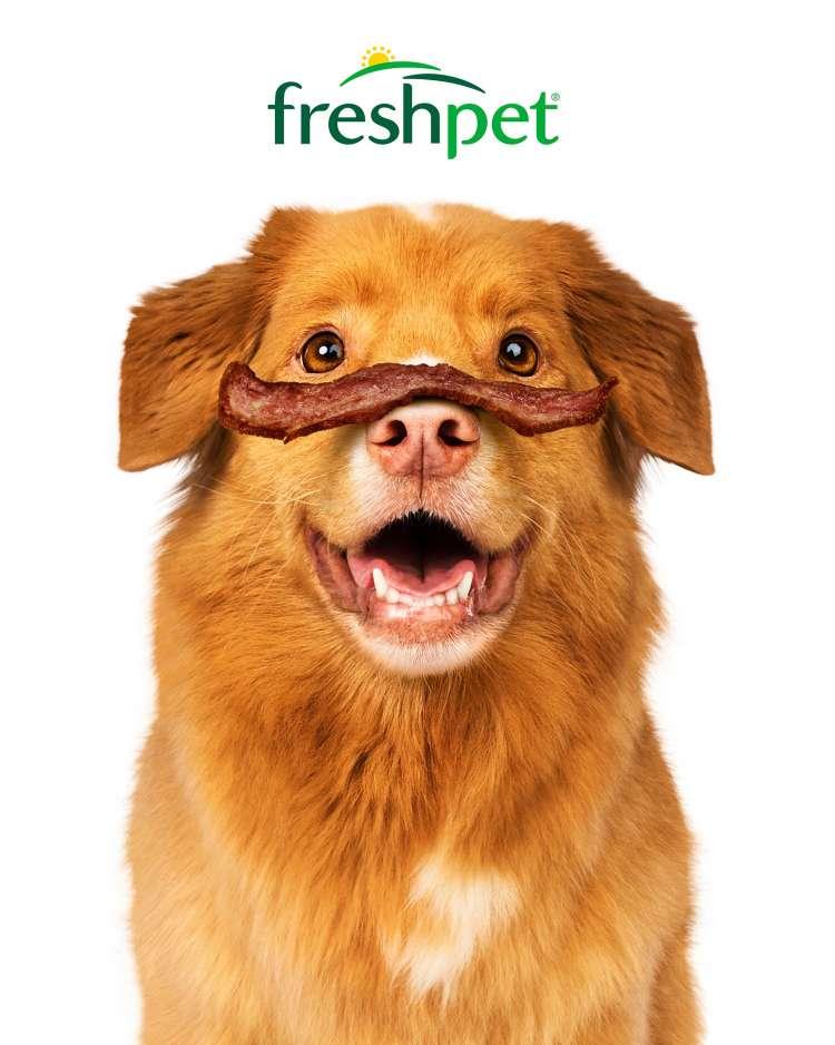 Freshpet Dog Joy Portrait_Turkey Bacon